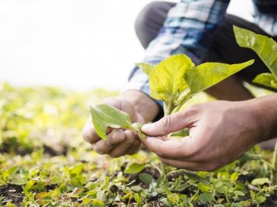 """Urge la inclusión del sector privado en el grupo de trabajo en el marco de la """"II Reforma Agraria"""""""
